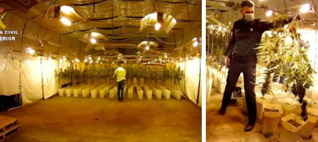 瓦伦西亚破获非法大麻种植团伙 5名中国人被捕