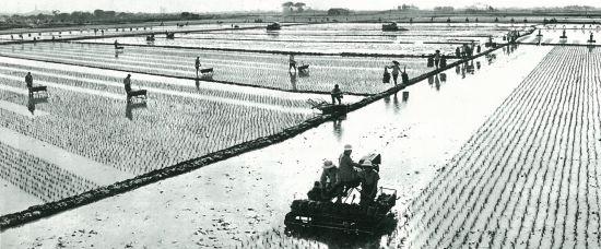 1970年代,广东农村推广使用播秧机。