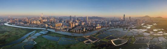 今日深圳河两岸,一边是香港水田,一边是繁华的深圳中心城区。