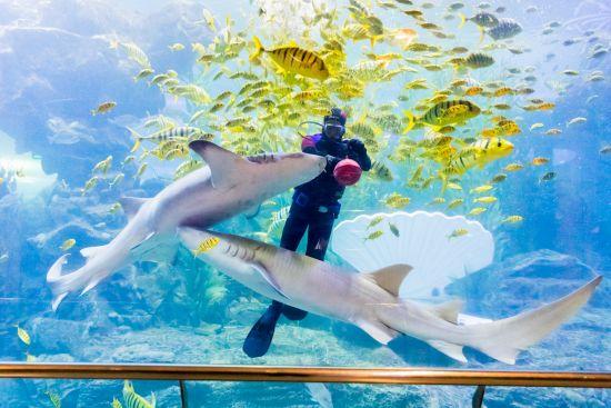 """海底世界""""与鲨共舞""""表演"""